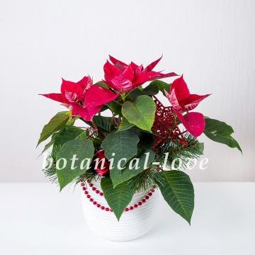 Купить Композиция 10 в интернет-магазине - Продажа новогодних цветочных композиций из живых цветов в Санкт-Петербурге