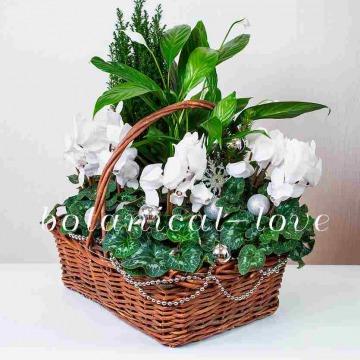 Купить Композиция 3 в интернет-магазине - Продажа новогодних цветочных композиций из живых цветов в Санкт-Петербурге