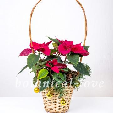 Купить Композиция 5 в интернет-магазине - Продажа новогодних цветочных композиций из живых цветов в Санкт-Петербурге