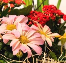 Купить АКЦИЯ Весенние композиции к 8 марта в интернет-магазине - Продажа цветочных композиций из живых цветов в Санкт-Петербурге