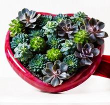 Купить Интерьерные композиции в интернет-магазине - Продажа цветочных композиций из живых цветов в Санкт-Петербурге