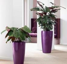 Купить подвесные кашпо для цветов в интернет магазине