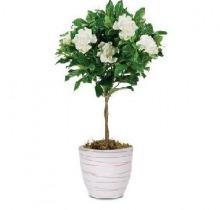 Горшечные цветы купить в санкт-петербурге доставка цветов в пензе отзывы