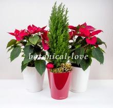 Купить Композиция 12 в интернет-магазине - Продажа новогодних цветочных композиций из живых цветов в Санкт-Петербурге