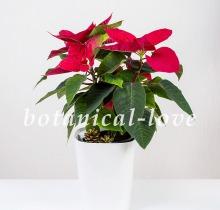 Купить Композиция 14 в интернет-магазине - Продажа новогодних цветочных композиций из живых цветов в Санкт-Петербурге