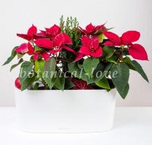 Купить Композиция 15 в интернет-магазине - Продажа новогодних цветочных композиций из живых цветов в Санкт-Петербурге