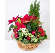 Купить Новогодняя коллекция в интернет-магазине - Продажа цветочных композиций из живых цветов в Санкт-Петербурге