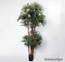 Купить Пальмы в интернет-магазине - Продажа комнатных растений для дома и офиса в Санкт-Петербурге