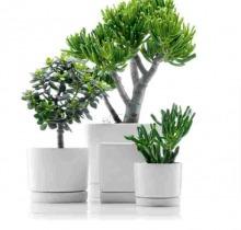 Купить Кактусы и суккуленты в интернет-магазине - Продажа комнатных растений для дома и офиса в Санкт-Петербурге