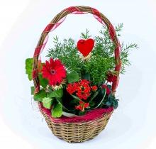 Купить Композиции в подарок в интернет-магазине - Продажа цветочных композиций из живых цветов в Санкт-Петербурге