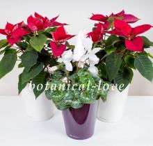 Купить Композиция 11 в интернет-магазине - Продажа новогодних цветочных композиций из живых цветов в Санкт-Петербурге