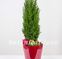 Купить Композиция 13 в интернет-магазине - Продажа новогодних цветочных композиций из живых цветов в Санкт-Петербурге