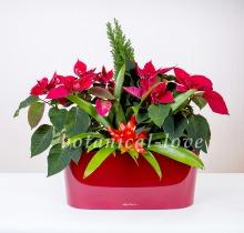 Купить Композиция 17 в интернет-магазине - Продажа новогодних цветочных композиций из живых цветов в Санкт-Петербурге