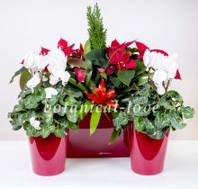 Купить Композиция 18 в интернет-магазине - Продажа новогодних цветочных композиций из живых цветов в Санкт-Петербурге