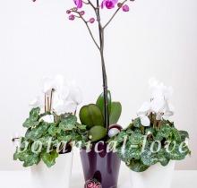Купить Композиция 19 в интернет-магазине - Продажа новогодних цветочных композиций из живых цветов в Санкт-Петербурге