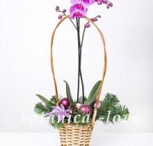 Купить Композиция 2 в интернет-магазине - Продажа новогодних цветочных композиций из живых цветов в Санкт-Петербурге