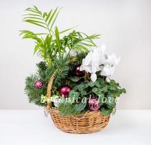 Купить Композиция 4 в интернет-магазине - Продажа новогодних цветочных композиций из живых цветов в Санкт-Петербурге