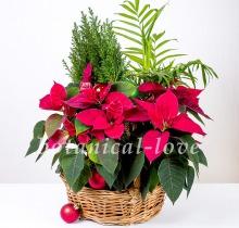 Купить Композиция 6 в интернет-магазине - Продажа новогодних цветочных композиций из живых цветов в Санкт-Петербурге