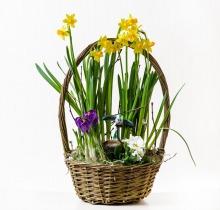 Купить Весенние композиции в интернет-магазине - Продажа цветочных композиций из живых цветов в Санкт-Петербурге